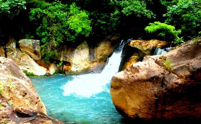 Jungle of Costa rica