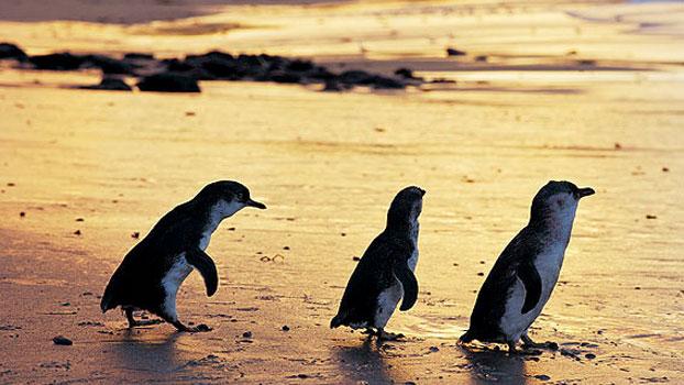 phillip-island, Phillip Island Melbourne