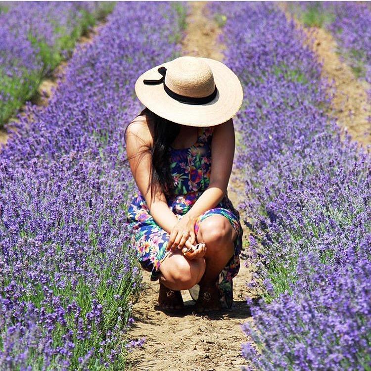 Port Stanley Blue Flag Beach Southwest Ontario Steed&co lavender fields