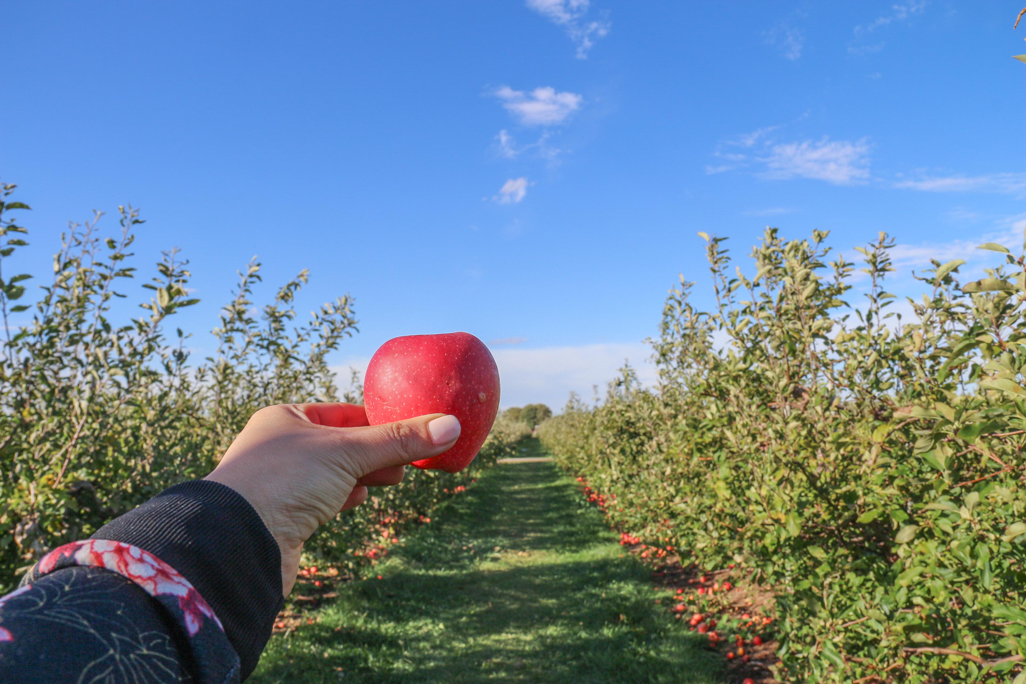 The Wine Lover's Guide to Windsor Essex Pelee Island | Thiessen's Orchards